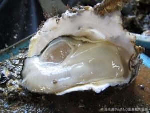 牡蠣剥き作業(堀内昇) 008_s