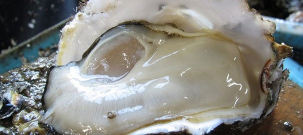 Hamanako Oyster